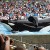 """Beyond the SeaWorld: An Interview with Gabriela Cowperthwaite and John Hargrove of """"Blackfish"""""""